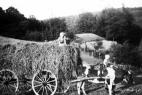 landwirtschaft-plettenberg11