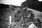 landwirtschaft-plettenberg12