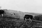 landwirtschaft-plettenberg21