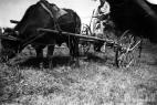 landwirtschaft-plettenberg22