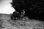 landwirtschaft-plettenberg23