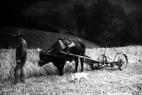 landwirtschaft-plettenberg24