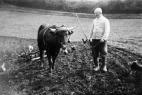 landwirtschaft-plettenberg4